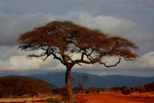 kenyan sand boa care influenced by natural habitat