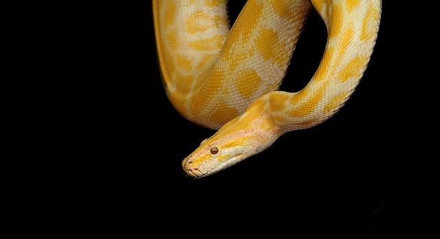 snake escape 2