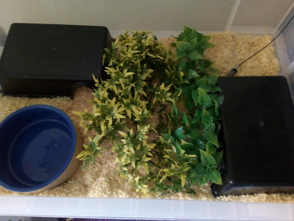 snake setup